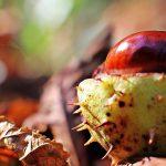 Kaštany – podzimní poklad